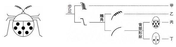 5f7c05eb2ec15.jpg